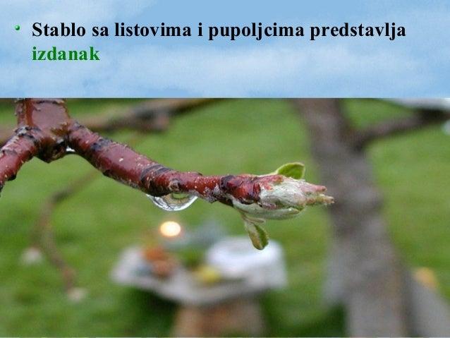 BILJKE BEZ SEMENA -mahovine i paprati- BILJKE SA SEMENOM -golosemenice i skrivenosemenice-