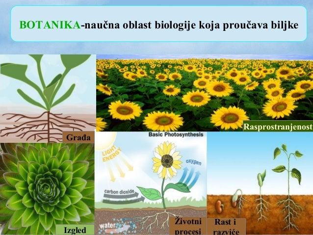 BOTANIKA-naučna oblast biologije koja proučava biljke Izgled Građa Životni procesi Rast i Rasprostranjenost