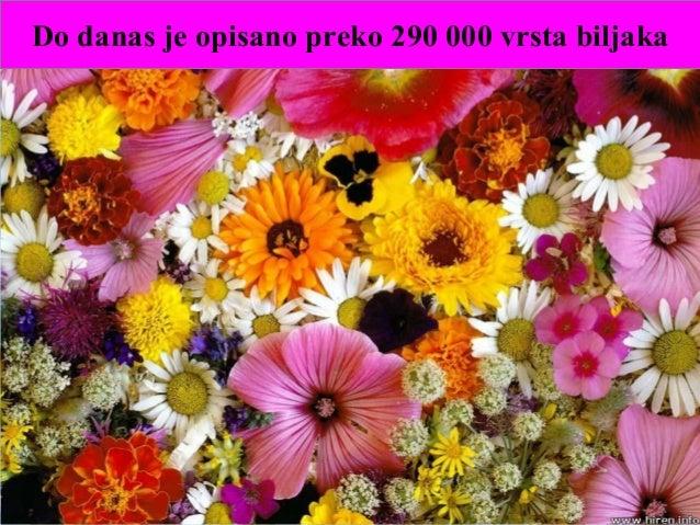 Do danas je opisano preko 290 000 vrsta biljaka