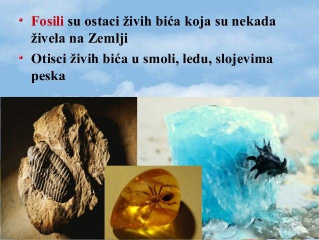 Fosili su ostaci živih bića koja su nekada živela na Zemlji Otisci živih bića u smoli, ledu, slojevima peska