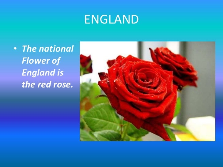 National flowers 2 england the national flower of england is the red rose mightylinksfo
