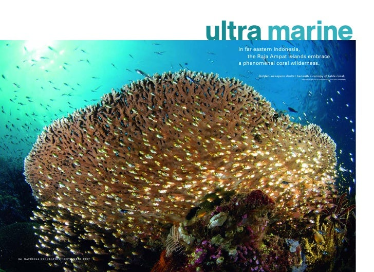 ultra marine                                                    In far eastern Indonesia,                                 ...