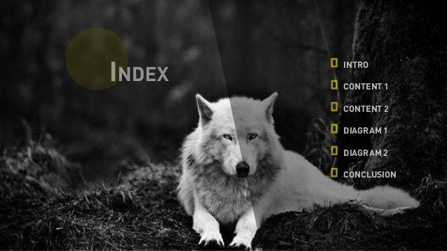 Free Dog Training Videos Online