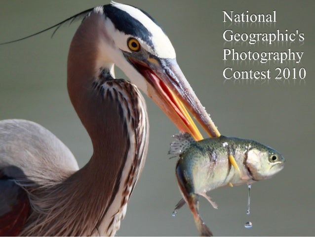 National Geographic's Photography Contest 2010 National Geographic is once again holding their annual Photo Contest, with ...