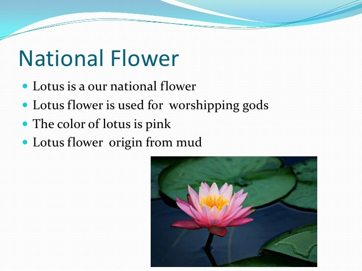Lotus The National Flower Of India Lotus The National Flower Of