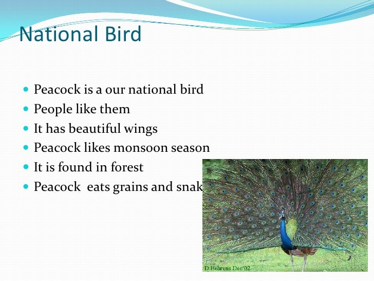 why peacock is our national bird in hindi