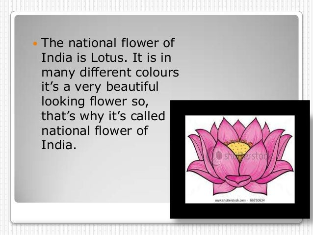    The national flower of    India is Lotus. It is in    many different colours    it's a very beautiful    looking flowe...