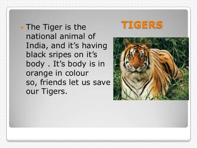    The Tiger is the          TIGERS    national animal of    India, and it's having    black sripes on it's    body . It'...