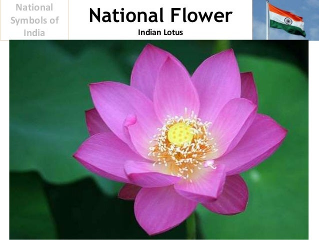 the flower of india