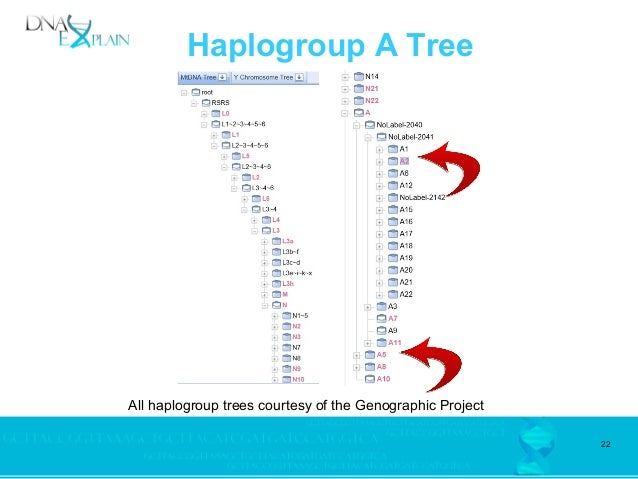 Native American Mitochondrial Haplogroup Discoveries