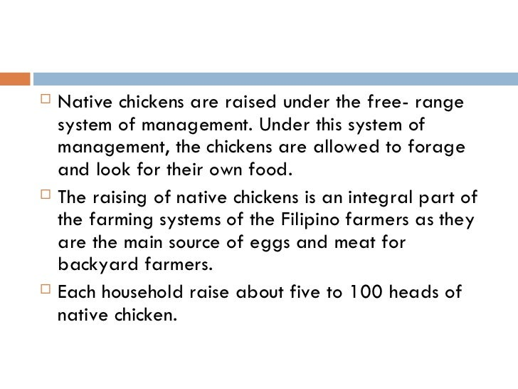 Native Chicken Production In The Philippines