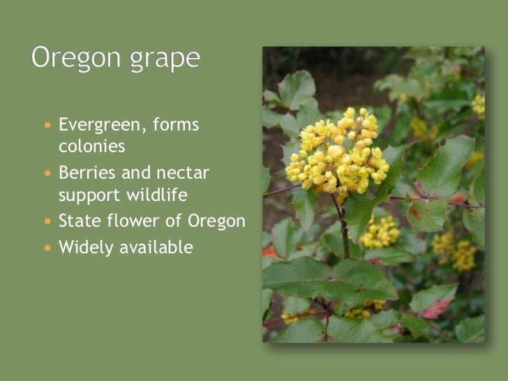 Native Plants To Oregon Part - 44: Easy To Grow; 25.