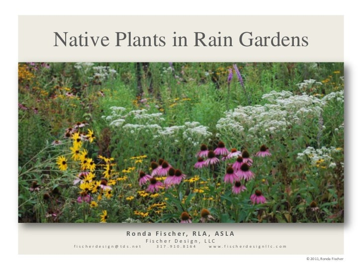 Native Plants in Rain Gardens<br />Ronda Fischer, RLA, ASLA<br />Fischer Design, LLC<br />fischerdesign@tds.net      317.9...
