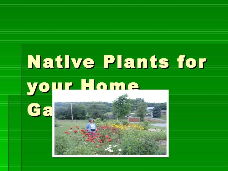 Native Plants for your Home Garden