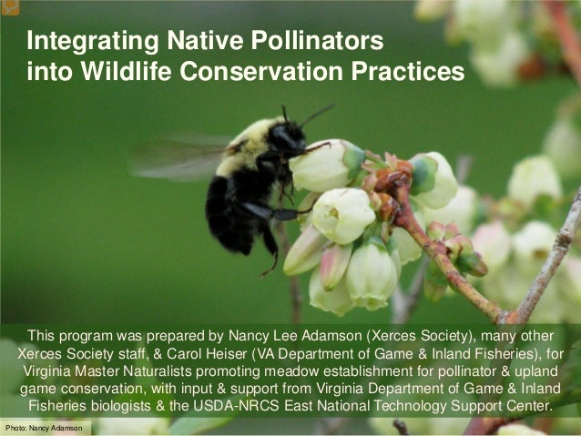 Integrating Native Pollinators     into Wildlife Conservation Practices   This program was prepared by Nancy Lee Adamson (...