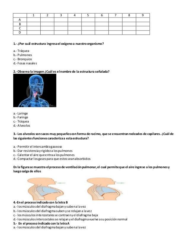 1 2 3 4 5 6 7 8 9 A B C D 1.- ¿Por cuál estructura ingresael oxígenoa nuestroorganismo? a.- Tráquea b.- Pulmones c.- Bronq...