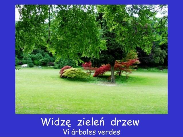 Widzę zieleń drzew    Vi árboles verdes
