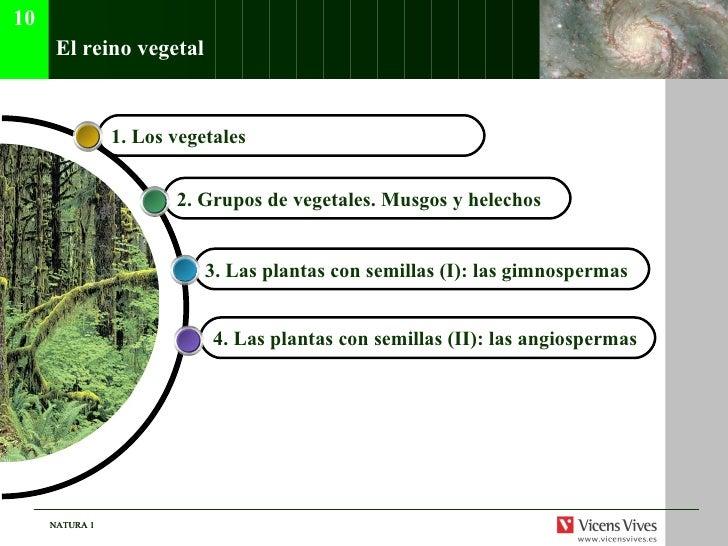 El reino vegetal 4. Las plantas con semillas (II): las angiospermas   3. Las plantas con semillas (I): las gimnospermas  2...
