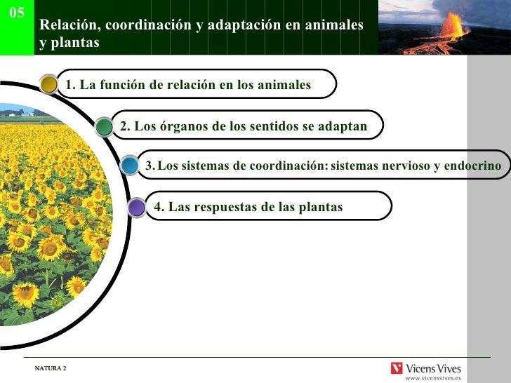 Relaci ón, coordinación y adaptación en animales y plantas 4.  Las respuestas de las plantas   3.   Los sistemas de coordi...