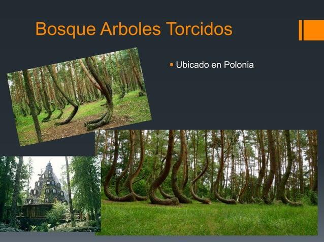 Bosque Arboles Torcidos  Ubicado en Polonia