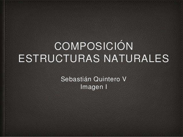 COMPOSICIÓN ESTRUCTURAS NATURALES Sebastián Quintero V Imagen I