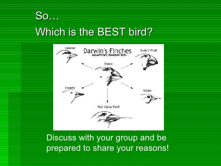 So… Which is the BEST bird? Discuss with your group and be prepared to share your reasons!