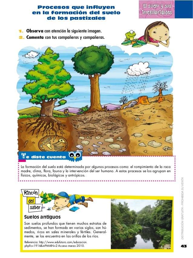 Naturales 6 for Componentes quimicos del suelo