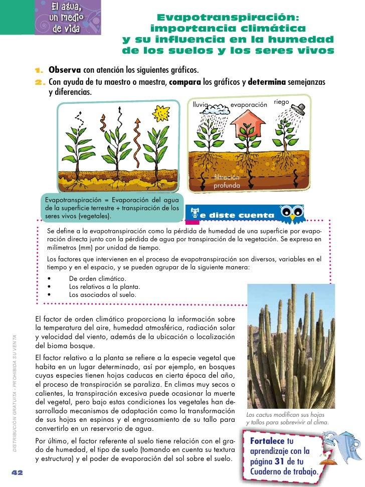 Naturales 7 2 for Importancia de los suelos