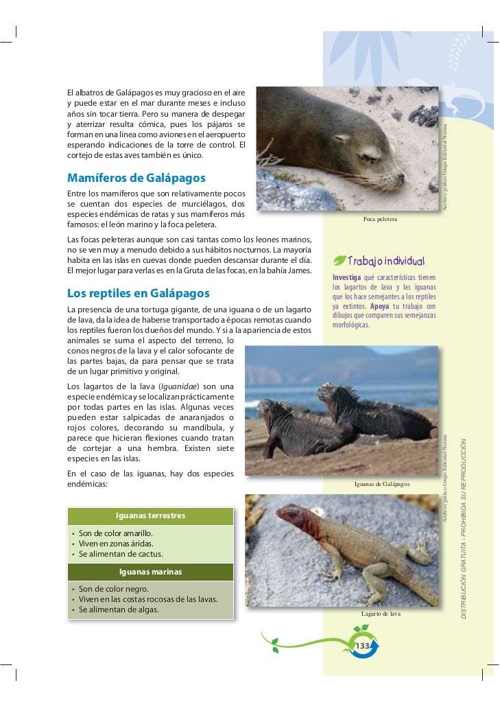 El albatros de Galápagos es muy gracioso en el airey puede estar en el mar durante meses e inclusoaños sin tocar tierra. P...
