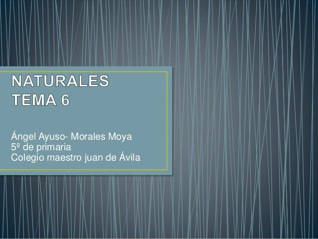 Ángel Ayuso- Morales Moya 5º de primaria Colegio maestro juan de Ávila