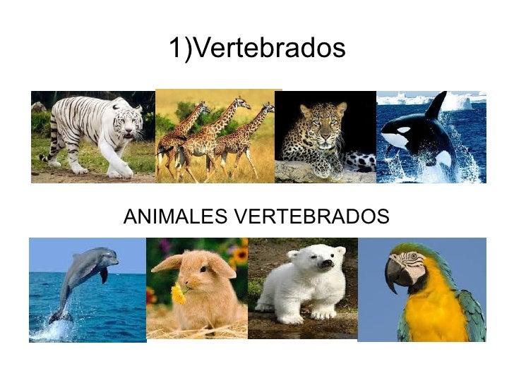 1)VertebradosANIMALES VERTEBRADOS