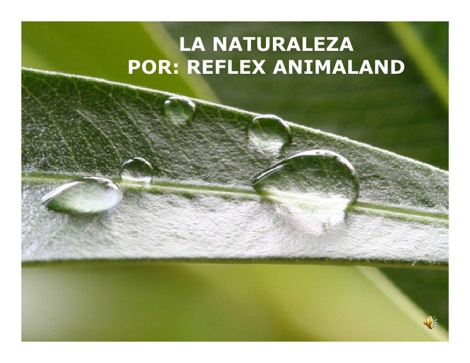 LA NATURALEZAPOR: REFLEX ANIMALAND                    Page 1