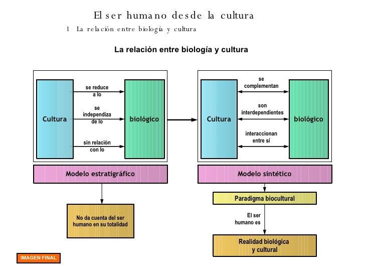 El ser humano desde la cultura 1 La relación entre biología y cultura La relación entre biología y cultura Cultura biológi...