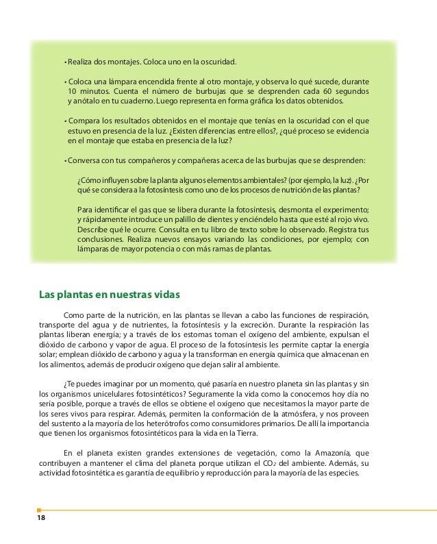 19 La Organización Mundial de la Salud recomienda un mínimo de 10 m² de áreas verdes por habitante dentro de las zonas urb...