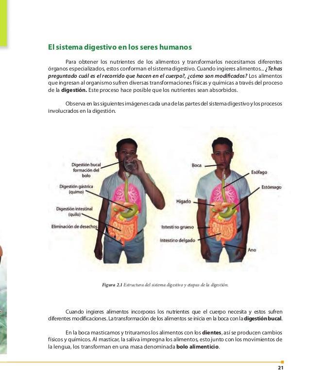 22 En la saliva hay enzimas digestivas que son producidas por las glándulas salivales. Esas enzimasactúanquímicamentesobre...