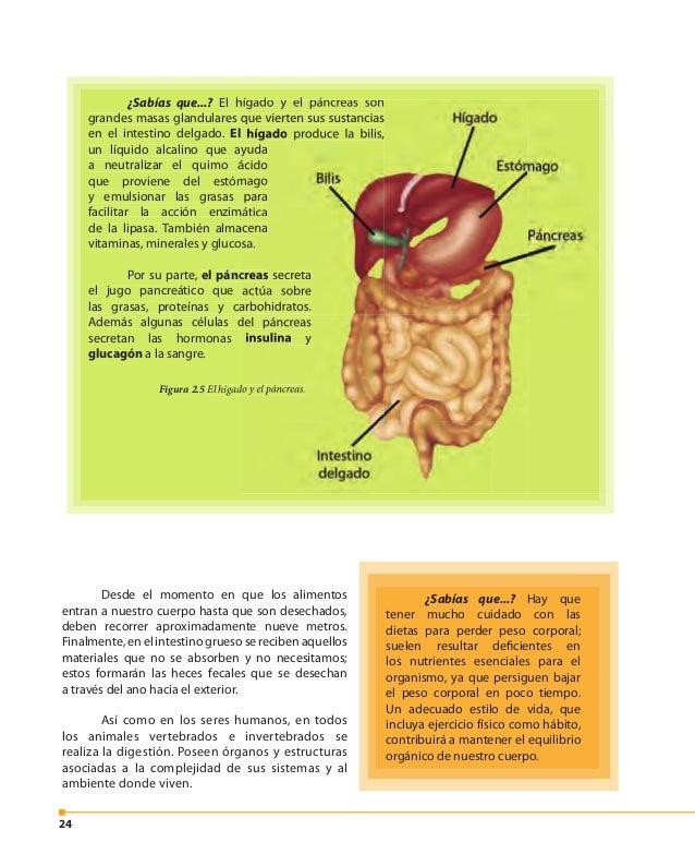 25 Turpial. Nombre científico: Icterus icterus. Ranita minera. Nombre científico: Dendrobates leucomelas. Abeja. Nombre ci...
