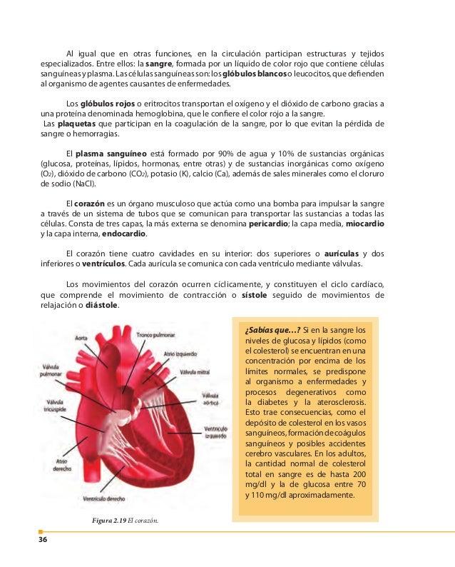 37 Nuestro corazón en acción Si caminas muy rápido o te ejercitas por largo tiempo, ¿qué ocurre con los latidos de tu cora...