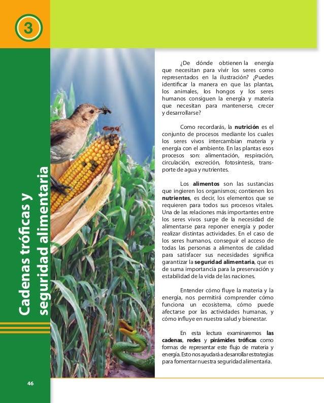 47 Cadenas alimentarias: ¿quién se alimenta de quién? En los distintos ambientes naturales, podemos identificar diversos e...