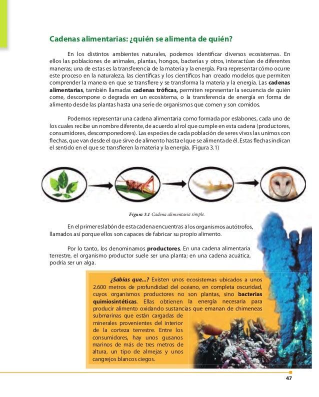 48 Veamos ahora la cadena alimentaria de la figura 3.2 el segundo eslabón corresponde a los animales herbívoros que consum...