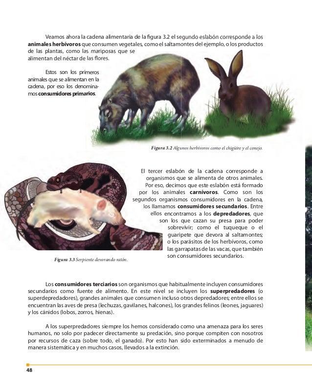 49 A los seres humanos se nos considera megadepredadores, porque podemos encontrar- nos al final de la cadena alimentaria,...