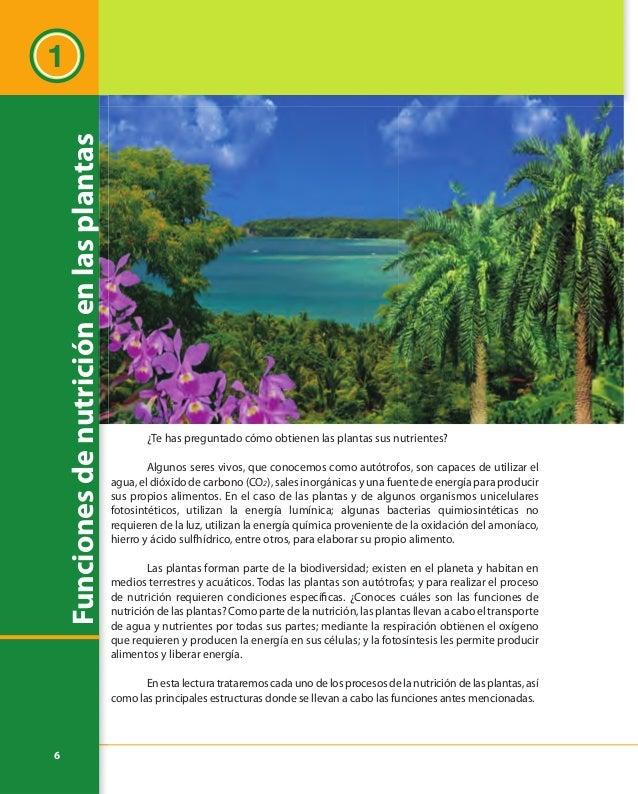7 Estructuras especializadas para las funciones de nutrición Lasplantassonmuydiversas,laspodemosagruparsegúndiferentescrit...