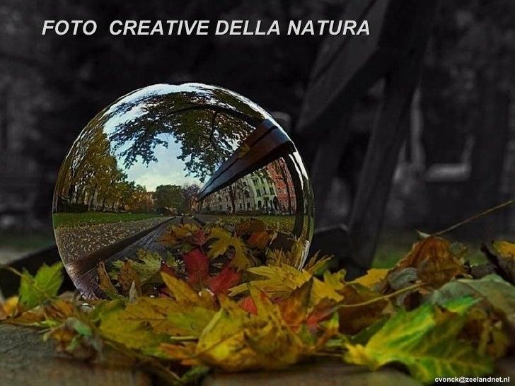 [email_address] FOTO  CREATIVE DELLA NATURA