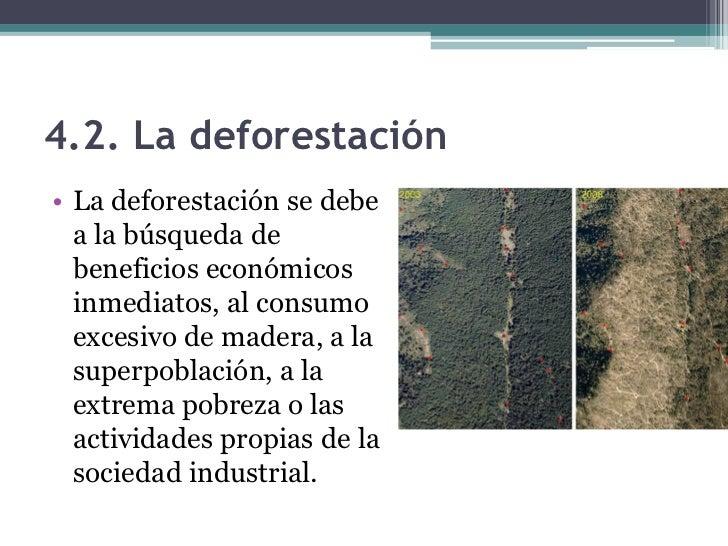 4.2. La deforestación• La reforestación y la limitación de cultivos  pueden paliar los efectos de la deforestación.