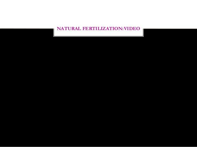 Natural fertilization of human  Slide 3