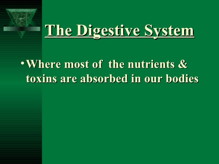 The Digestive System <ul><li>Where most of  the nutrients &  toxins are absorbed in our bodies </li></ul>