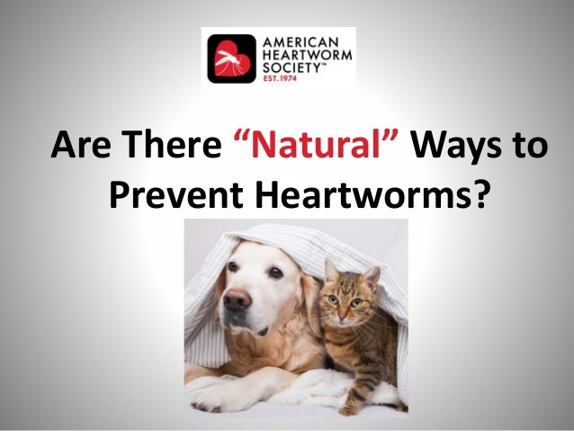 """Are There """"Natural"""" Ways to Prevent Heartworms? photo"""