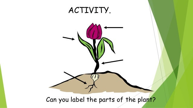 ACTIVITY Complete the sentences: Plants .