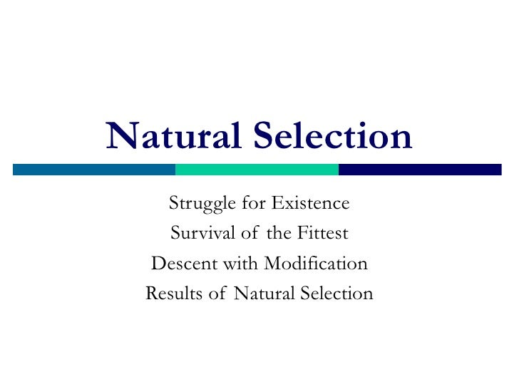 Natural Selection    Struggle for Existence     Survival of the Fittest  Descent with Modification  Results of Natural Sel...