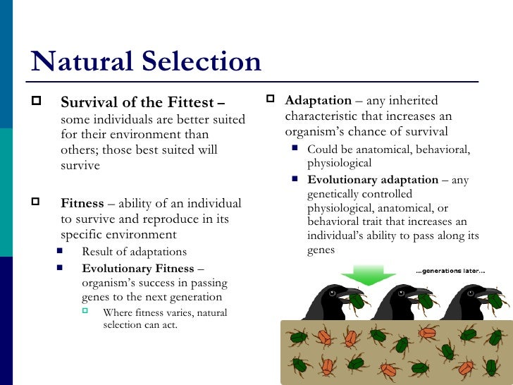 Survival Ofthe Fittest Natural Selection
