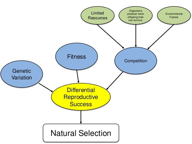 Natural Selection Fitness Concept